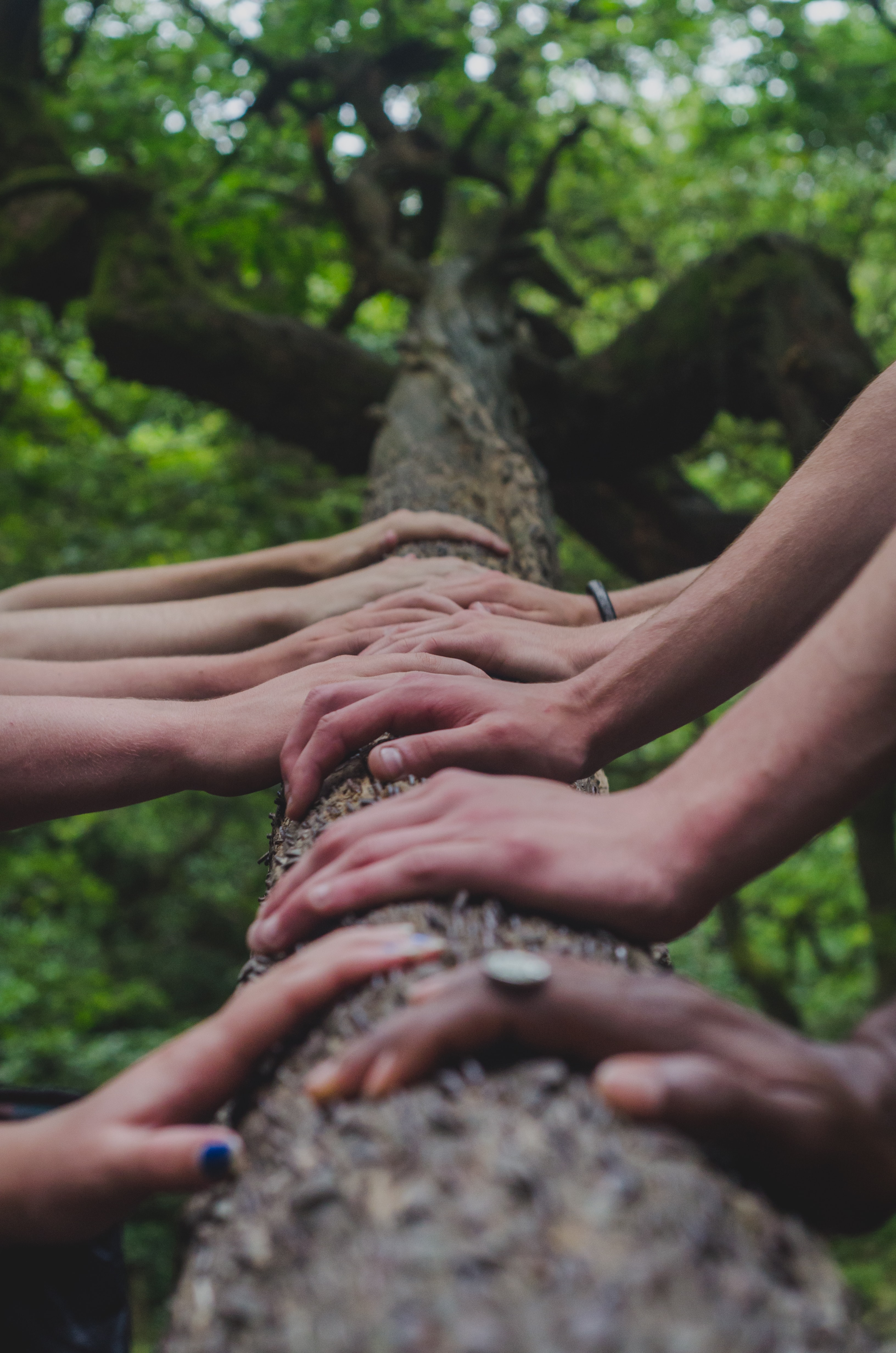 Hands on a tree branch